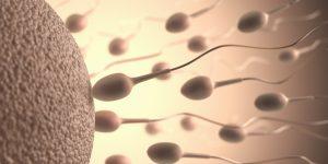 wprowadzenie plemniki analiza nasienia